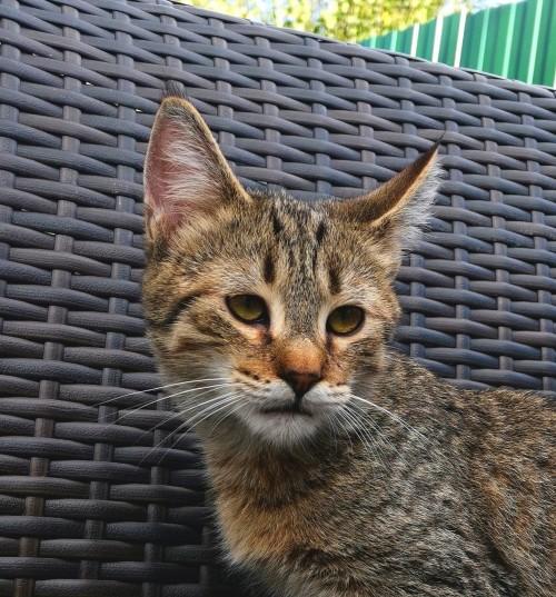 котик без поли-лап старший