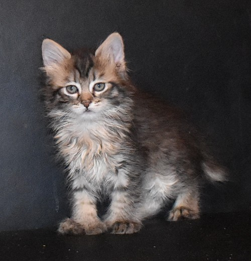 Котик от Хлои