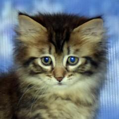Кошечка от Хлои поли