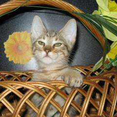 Котик от Бентли и Пурса