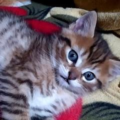 Кот с поли-лапами