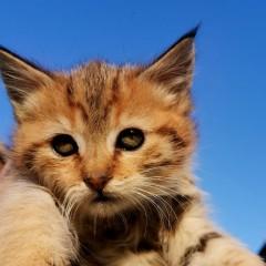 Кошка1
