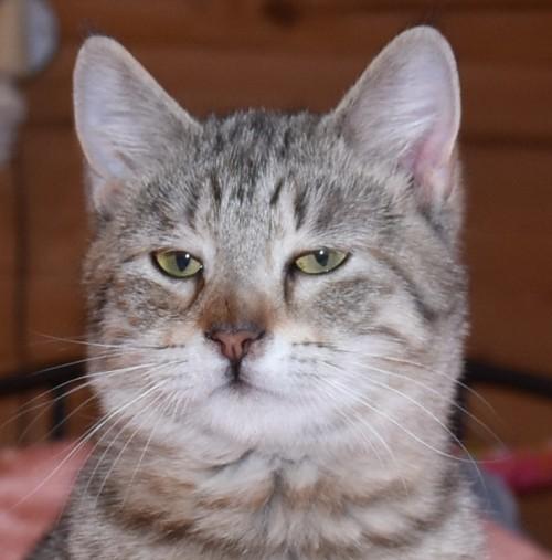 кошка от Белоснежки