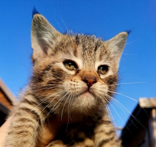 котик без поли-лап